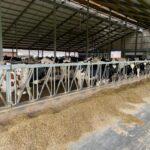Hogere melkproductie door robot optimalisatie