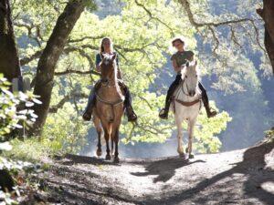 veevoeders paarden