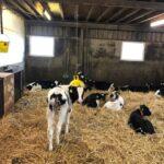melkproductie koe verhogen